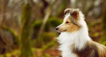 Parásitos perros
