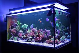 El cuidado del acuario es fundamental para la salud e higiene de tus peces. Es por ello que tupienso.com te ofrece todo lo necesario para ello.