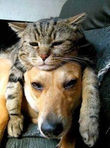 Deberás de hacer una excelente elección en la alimentación para las mascotas. En tupienso.com podrás encontrar la mejor alimentación para ello.