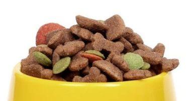 El Alimento para Perros de ayer y el de hoy