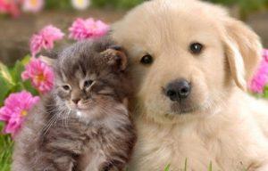 Encuentra una excelente y buena alimentación para mascotas. Te lo agradecerán siempre de estar bien nutridos.