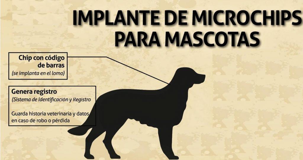 Identificador de mascotas