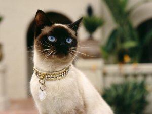 Maravillosos collares para gatos podrás encontrar en tu tienda online tupienso.com