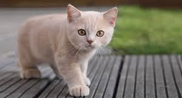 Depresión en tus gatos