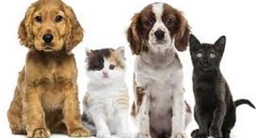 ¿Sus perros tienen diabetes?