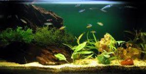 Un buen jardín para tus peces es lo que realmente necesitan para estar cómodos y felices en su hogar.