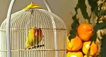 Cuidados de los pájaros en casa