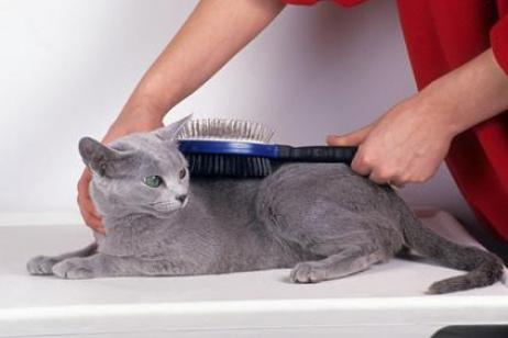 Eliminar pelo muerto en mascotas