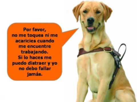 Perros Lazarillos Ayuda Para Personas Invidentes La Mejor Comida Para Tu Mascota Tupienso Com