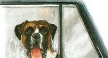 Cuidados con los perros en los vehículos