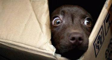 Miedo de los perros a los petardos