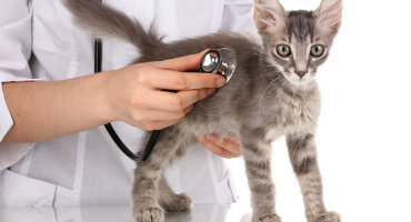 Salud e higiene de gatos