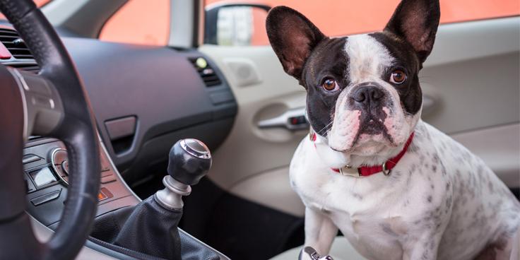 perros y viajes en coches