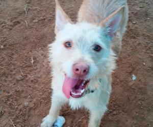 Los perros que presentan necesidades dentales se deben de cuidar. Para ello en tupienso.com podrás encontrar múltiples productos.