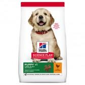 Hills Puppy Razas Grandes