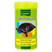 Specipez gammarus