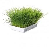 Bandeja hierba para gatos
