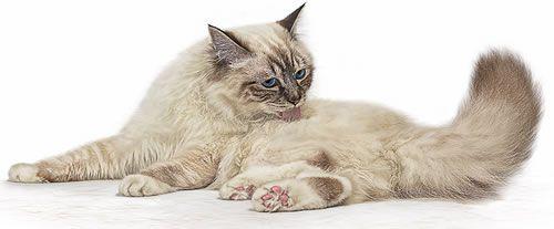 Pienso para gatos esterilizados previene bolas pelo