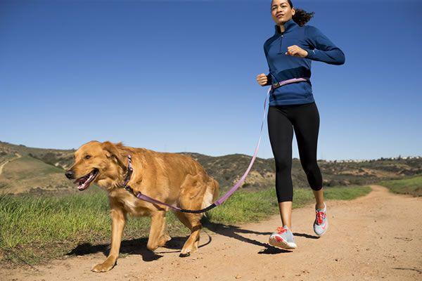 correa halti para perros