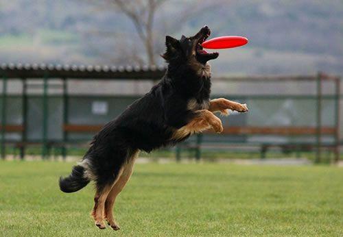 frisbee para lanzar al perro