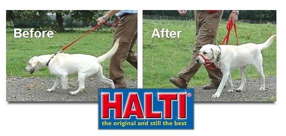 halti headcollar para perros