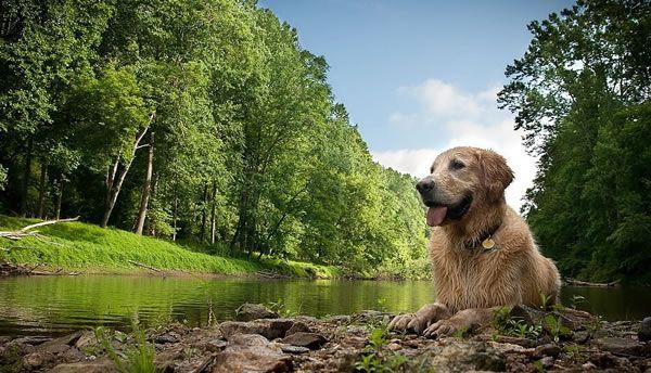 Pienso para perros Acana Wild Coast