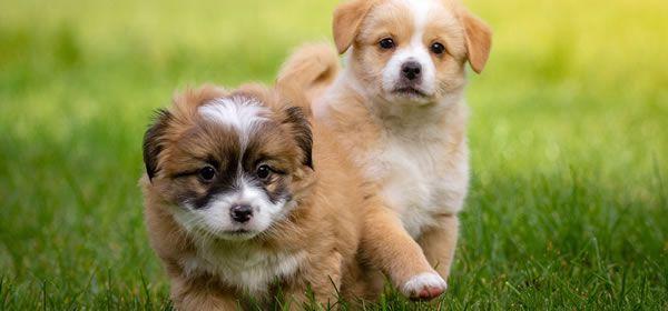 pienso natura diet puppy starter