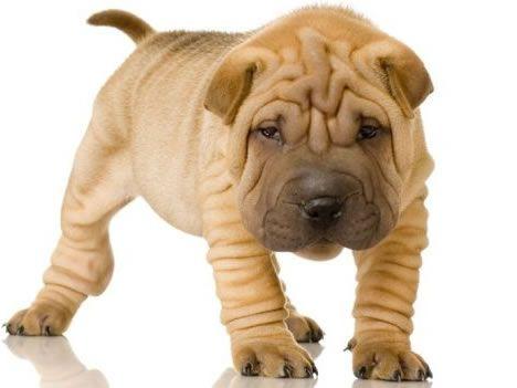 pienso semi humedo natural menu para cachorros